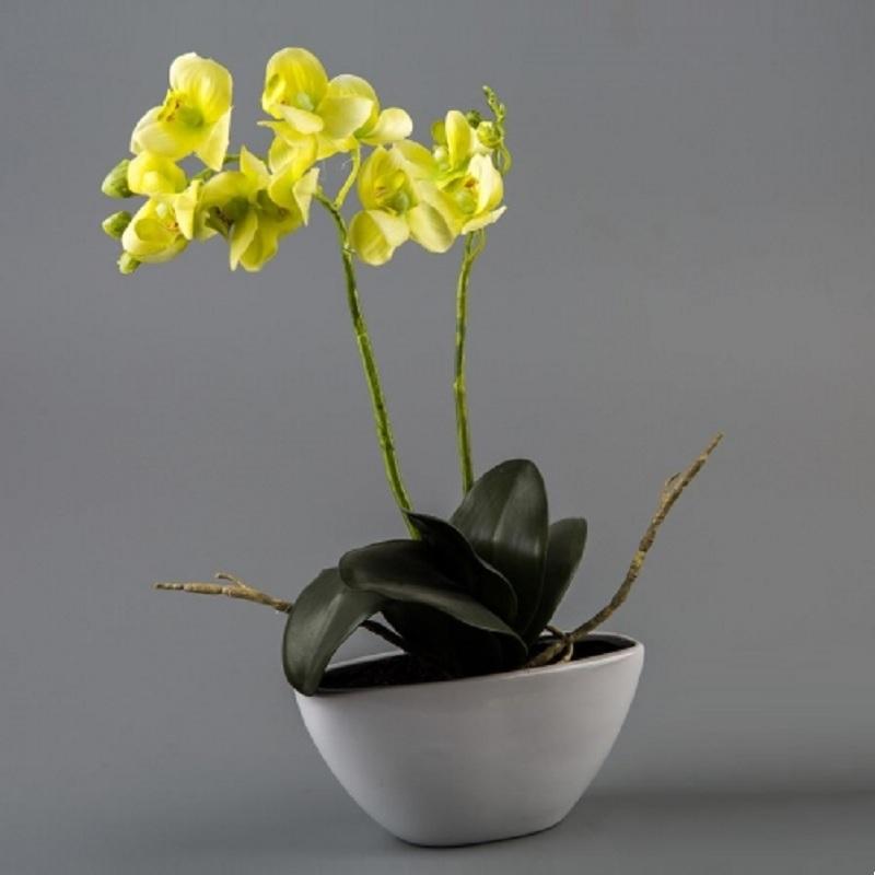 земельных участков купить орхидею в горшке в интернет магазине недорого Россия, Республика